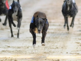 how to win greyhound betting