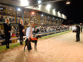 Belle Vue hosts the Betfair Laurels on Thursday night