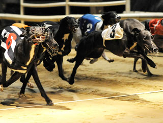 Who's your pick for Greyhound of the Year?