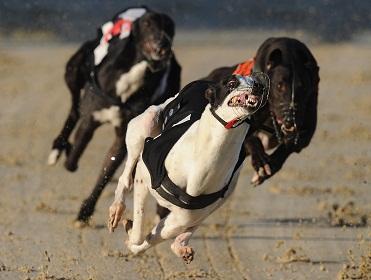 Romford dogs bettingadvice pk betting terms