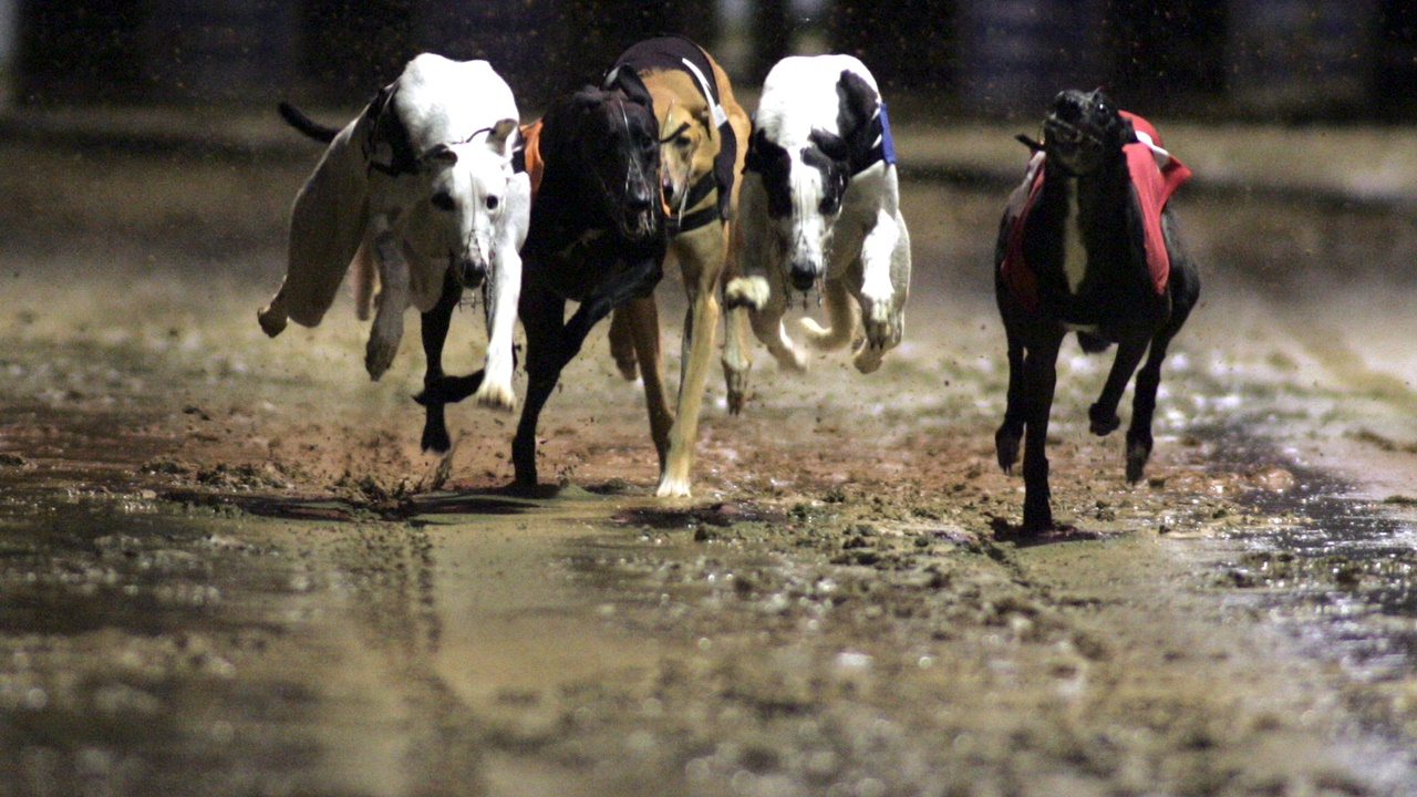 Sky Sports cameras head to Towcester for the Puppy Derby final