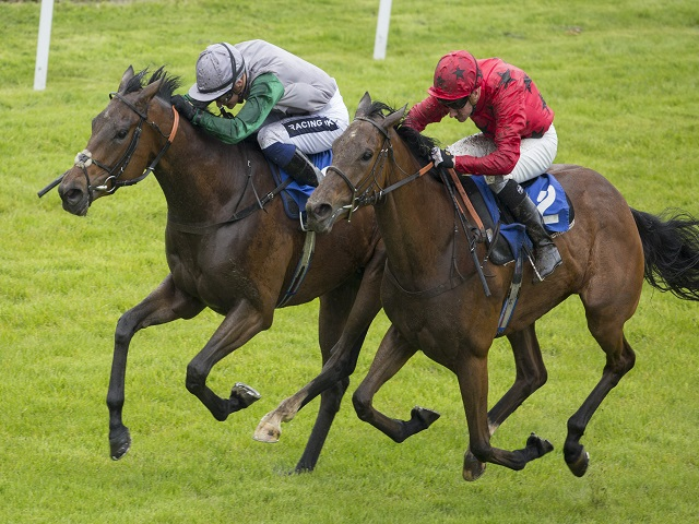 Tony is backing Bateel (above right) to triumph at Ascot on Saturday