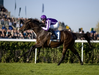 Camelot: Jamie's middle distance horse of 2012