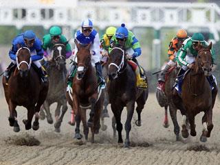 horse race betting: