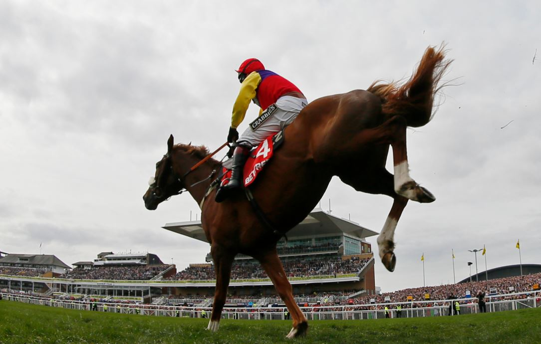 Will Native River win the Gold Cup?