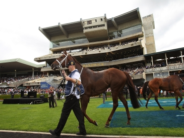 The All Aged Stakes comes from Randwick