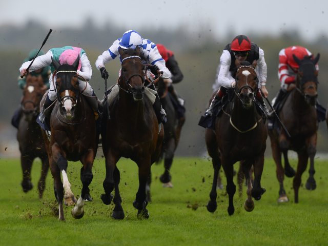 Both Frankel and his brother Noble Mission (pictured) have won the Champion Stakes in recent years